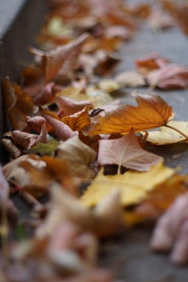 Autumn - Warsaw