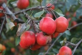 Autumn - Plock