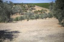 Onkaparinga River National Park