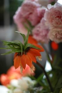 flower - 11