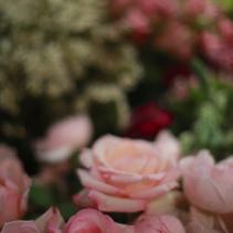 flower - 2