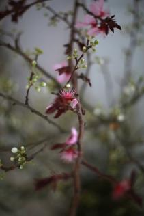 flower - 5