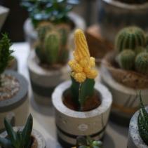 flower - 6